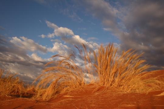 DESERT SESREIM NAMIBIE