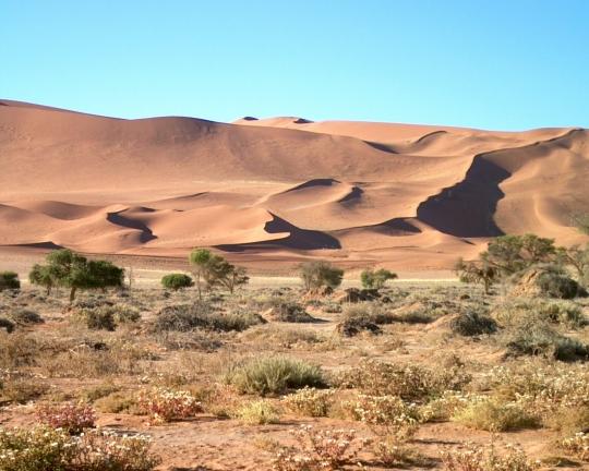 DESERT SOLITAIRE DE NAMIB
